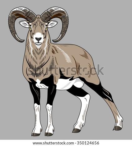 wild sheep - stock vector