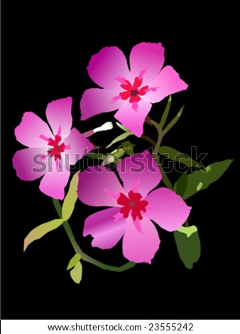 Wildflowers on black background - stock vector