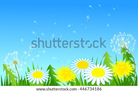 Wildflowers. The wind carries a dandelion seeds flying in the sky. Grass and flowers. The petals of daisies. Nature. Card. Vector.