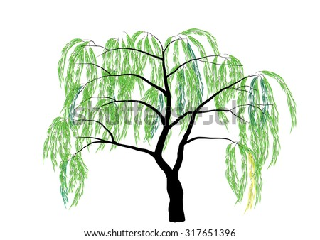 Willow Stock Photos, Royalty-Free Images & Vectors ...