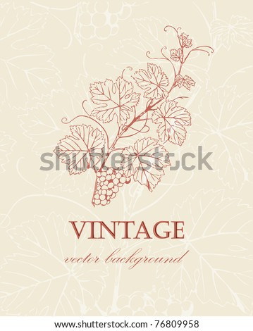 Wine label with  grape branch in retro style - stock vector