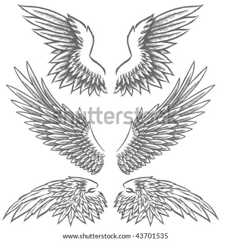 Wing Illustrations