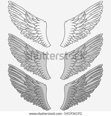 Wings of bird set, Hand drawn angel wing. vector