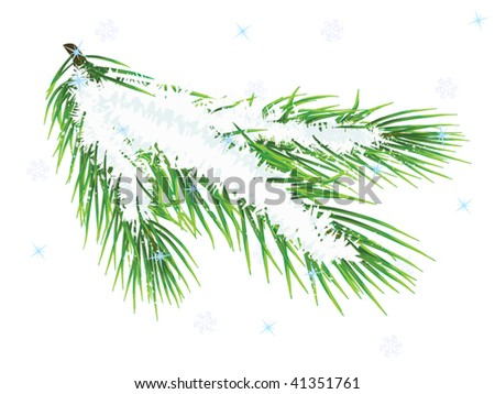 Winter pine twig isolated on white background (vector illustration) - stock vector