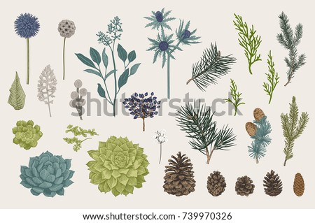 Winter set. Evergreen, cone, succulents, flowers, leaves, berries. Botanical vector vintage illustration. Colorful