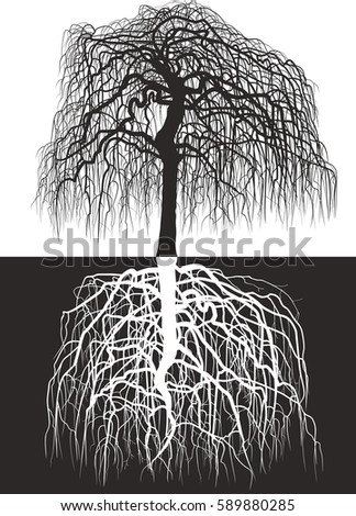 Wisteria tree along with roots/Vector illustration of Wisteria tree along with roots