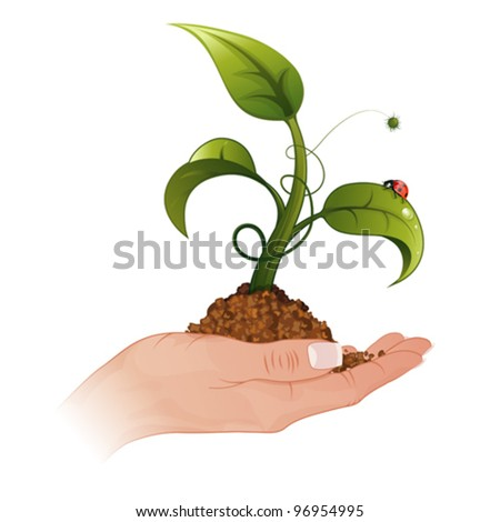 Woman Hand with the Young Green Sprout from the Ground with Water Drops and Ladybug, vector illustration - stock vector
