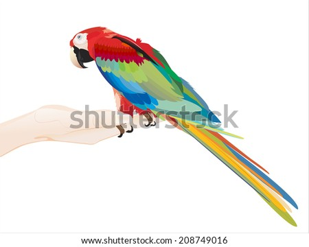 Woman's hand holding object- parrot