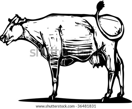 Woodcut style image of a common dairy cow. - stock vector
