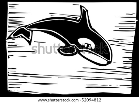 Woodcut vintage style image of a killer whale. - stock vector