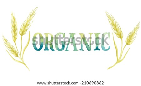 Word ORGANIC painted with green and blue watercolor framed by five ears of wheat. Vectorized watercolor painting. - stock vector