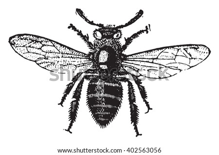 Working bee, vintage engraved illustration. Industrial encyclopedia E.-O. Lami - 1875.