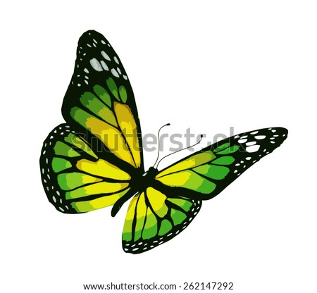 Yellow-green butterfly, isolated on white background - stock vector