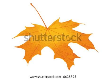 Yellow maple leaf. Vector graphics. - stock vector