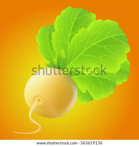 Yellow turnip with big leaves over orange background - stock vector
