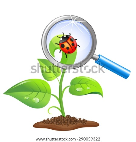 Young green sprout with ladybug and magnifier isolated on white background - stock vector