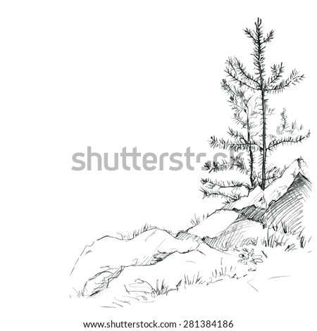 young pine trees and rocks drawing by pencil, sketch of wild nature, forest doodle, hand drawn vector illustration - stock vector