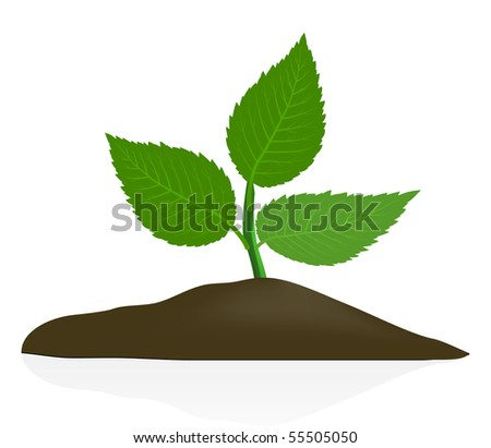 Young plant in dark soil isolated on white background - stock vector