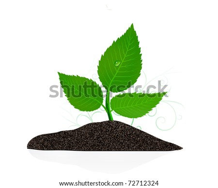 Young plant on the white backgrounds - stock vector