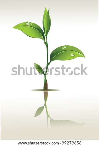 Young seedling - stock vector