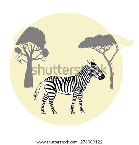 Zebra between savanna trees. Vector Illustration - stock vector