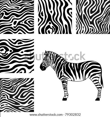 Zebra, texture of zebra - stock vector