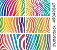 Zebra vector pack - rainbow skin pattern - stock vector